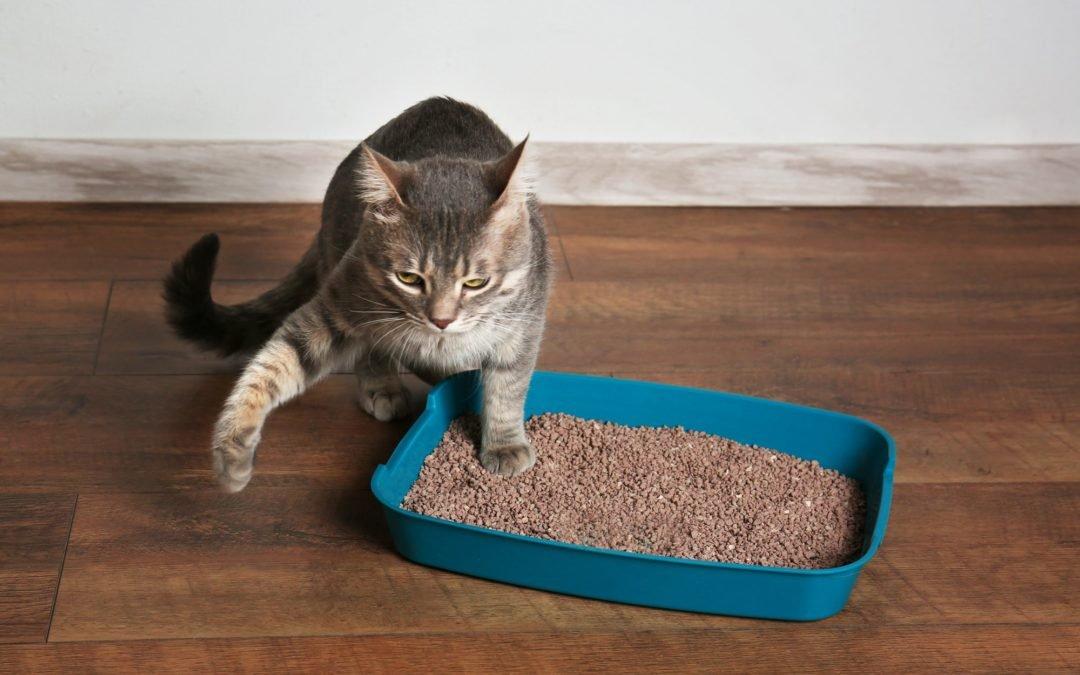 cat pee outside litter box