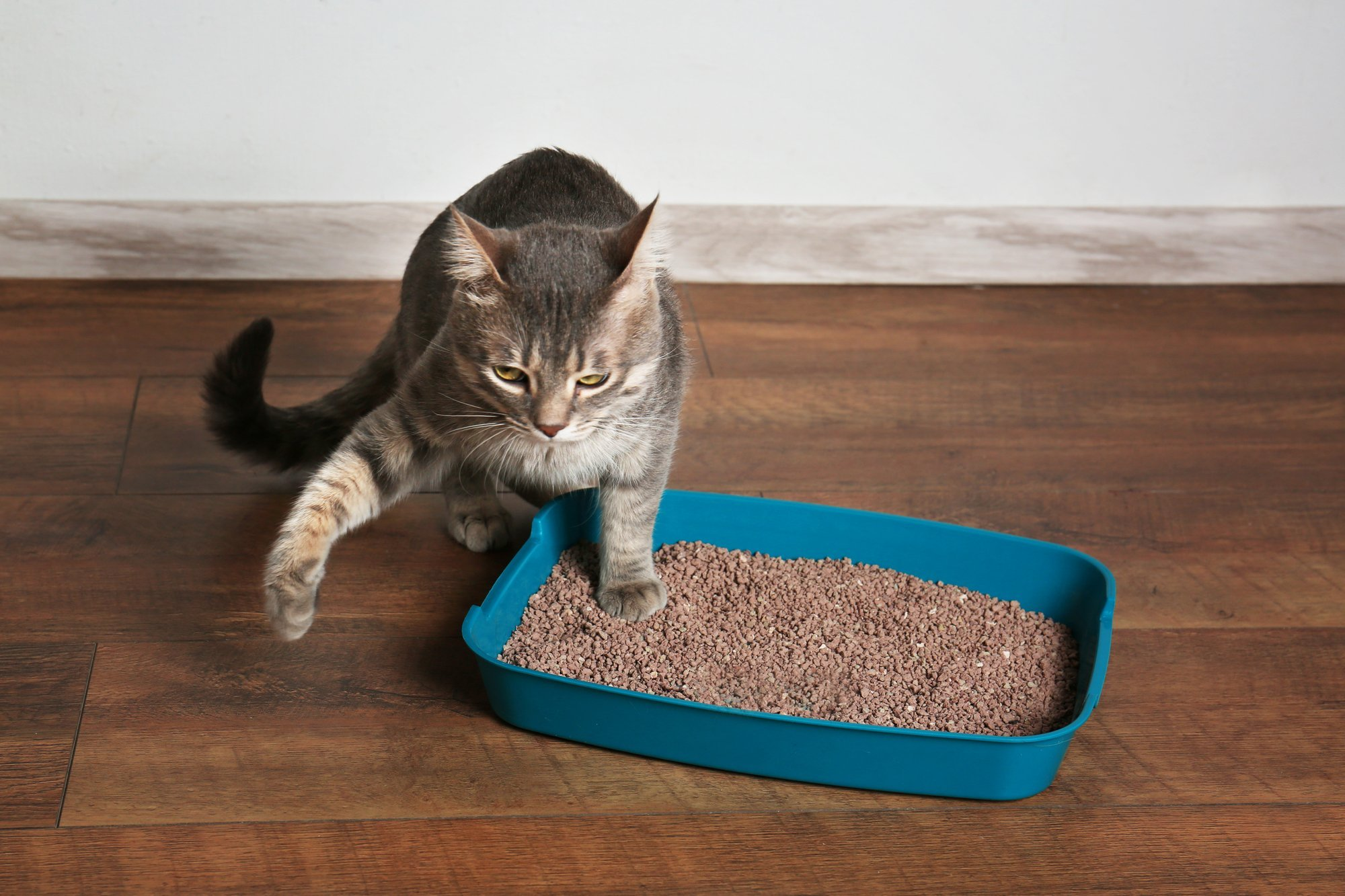 cat pee outside litter box