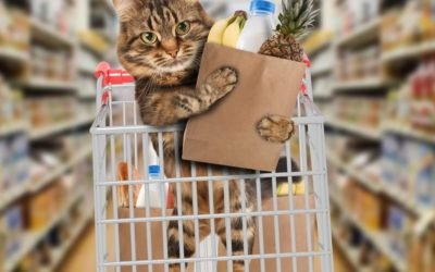 17 Essential Cat Supplies for a New Cat Parent