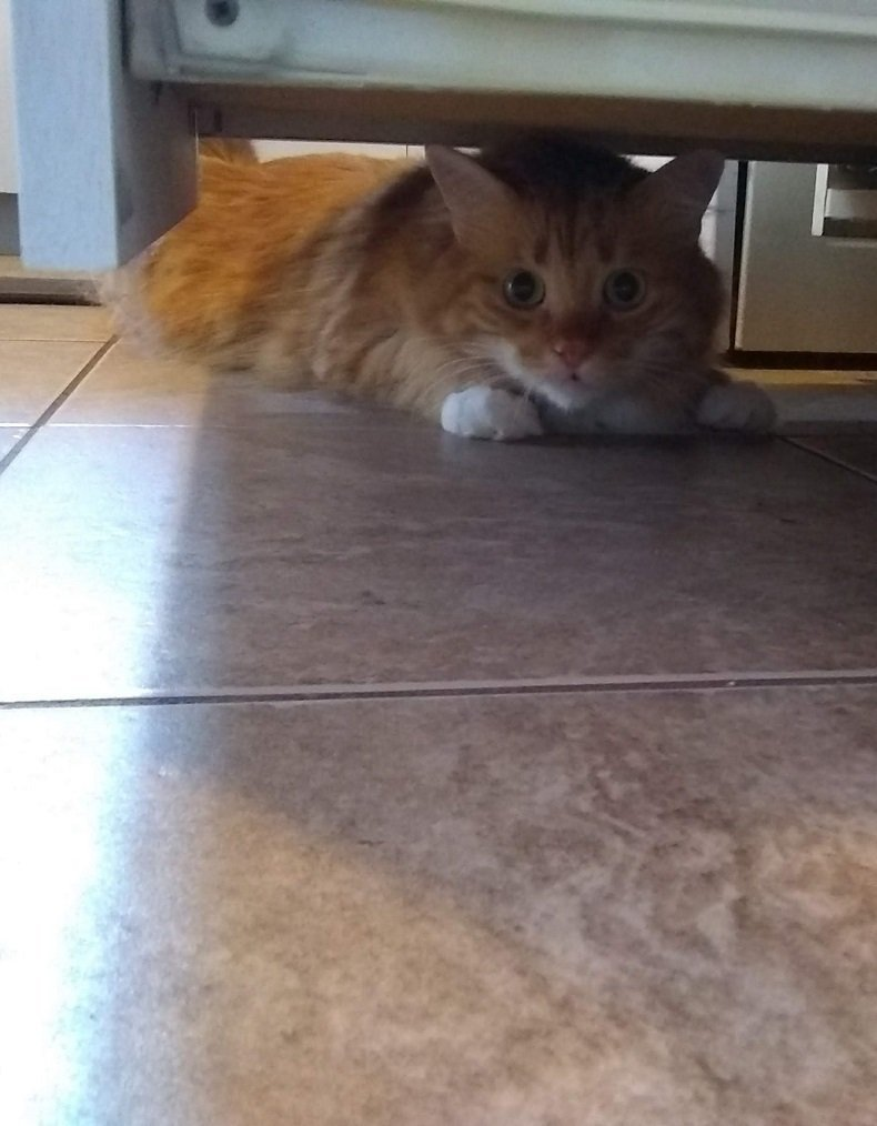 franklin orange cat