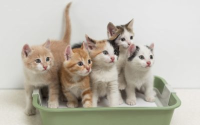 Flushable Cat Litter: Our Top 7 Picks for 2020