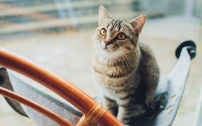 Are Cat Window Hammocks Safe?