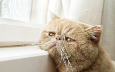 Tips to Improve Your Cat's Mental Health