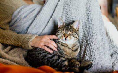 House Cats: Living With & Loving Your Indoor Cat