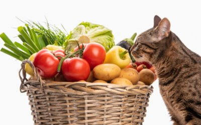 7 Foods & Plants That Are Poisonous for Cats
