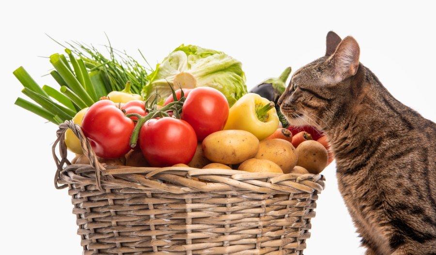 poisonous food plants cats