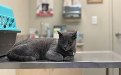Basic First Aid Tips for Cats