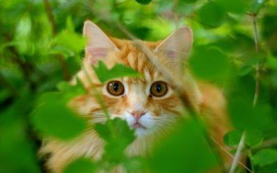 Cat-Friendly Outdoor Garden Plants