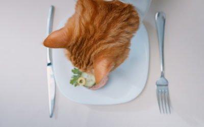 My Cat Won't Eat: Feeding a Fussy Cat