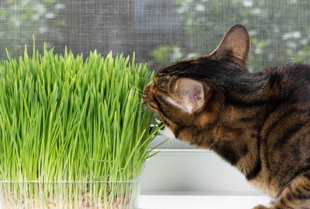 cat friendly house plants