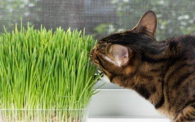 Cat-Friendly Indoor Plants