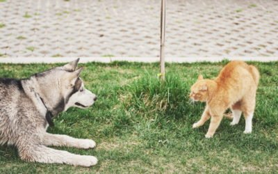 Introducing Cats to Dogs