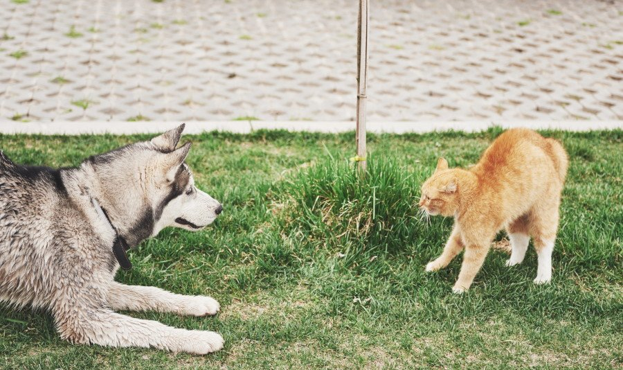 introducing cats and dogs