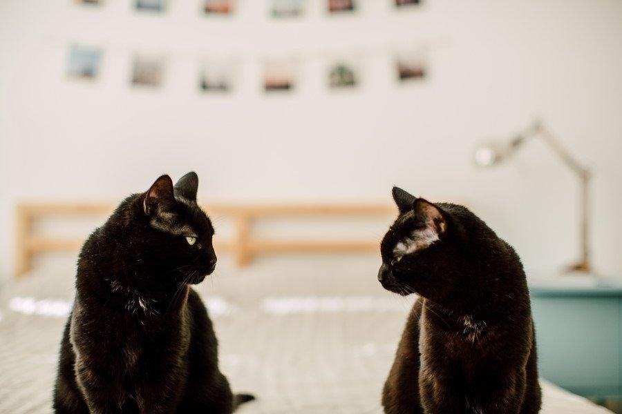 introducing cats