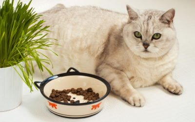 How Can I Tell if My Cat Has Diabetes?